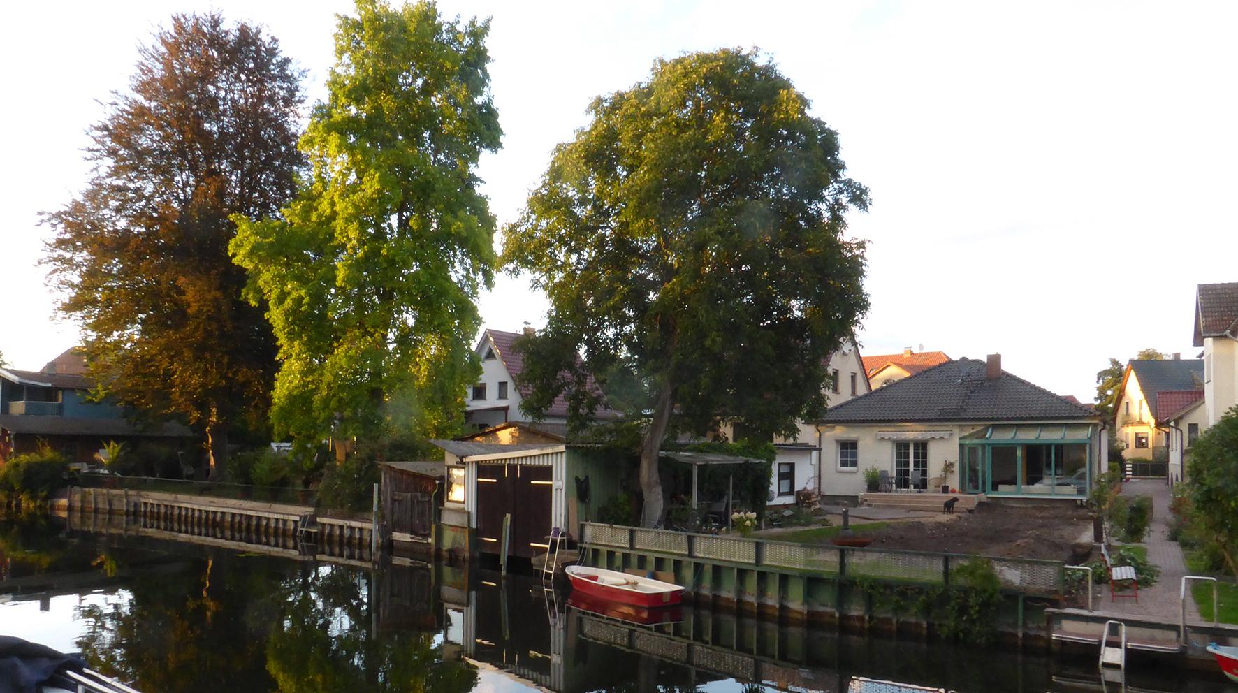 Ufer-Baeume